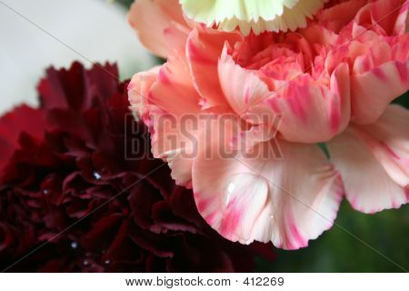 Pink And Red Carnations1