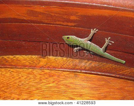 Home Gecko