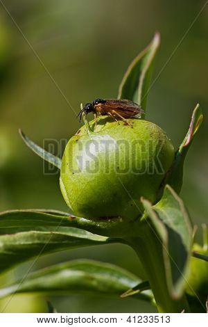 The Bud Of A Pion