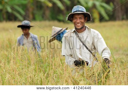 Happy thai farmer harvesting rice with family.