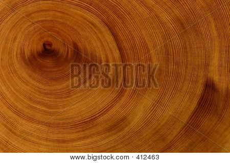 Background - Huon Pine
