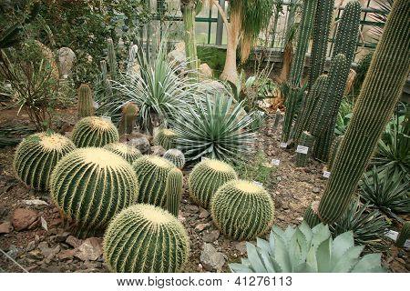 Cactus orangery