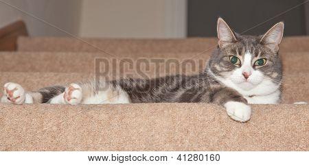 Gato en escaleras