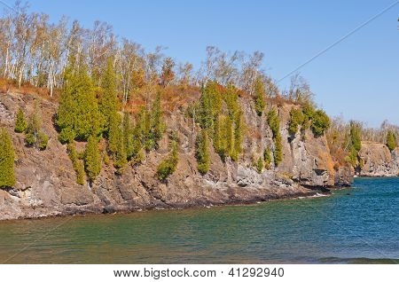 Pines Growing On Rocky Cliff Along The Great Lakes