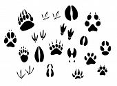 stock photo of hoof prints  - Animal  - JPG