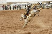 foto of bucking bronco  - bucking action during the saddle bronc riding competition at a rodeo - JPG
