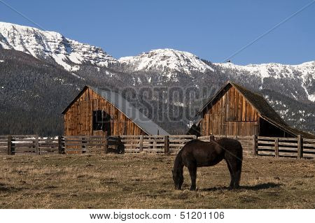 Livestock Horse Grazing Natural Wood Barn Mountain Ranch Winter