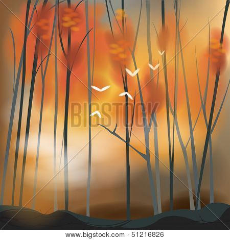 Barren Forest Background In Sunset Scene