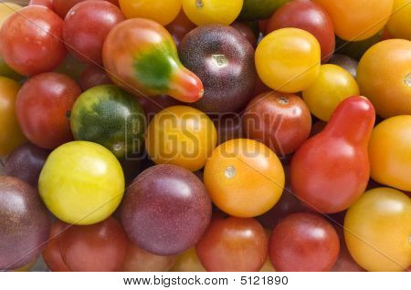 Multicolored Cherry Tomato's Bunch