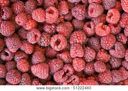 Red Raspberry As Background