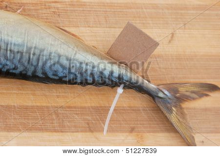 Bloated Fish With Cardboard Nameplate