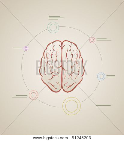 Vector brain inforaphic template. Elements are layered separately in vector file.