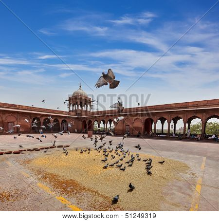 Pigeons in Jama Masjid - the largest mosque in India. Delhi, India