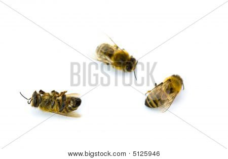Three Yellow And Black Bees