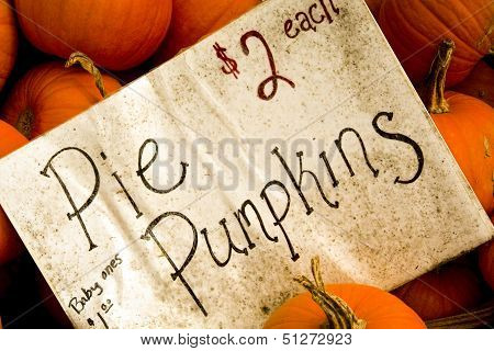 Pie pumpkins for sale
