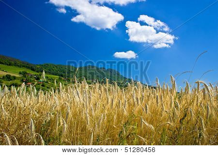 Wheat Field Under Colorful Mountain