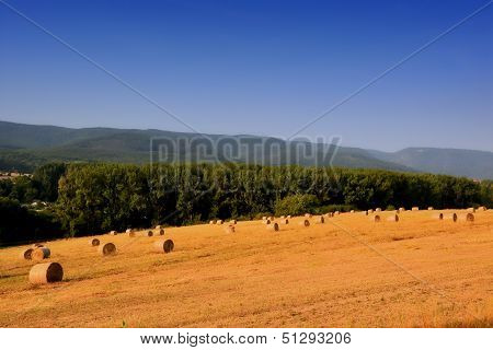 Grain field in the Harz National Park