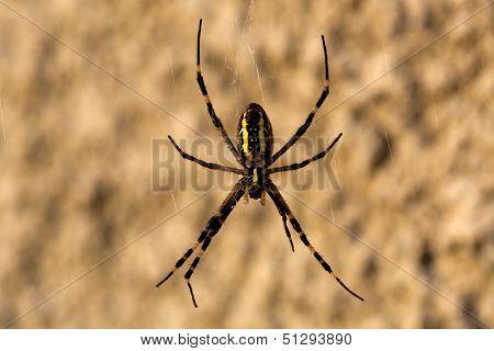 Spider on web - macro shoot