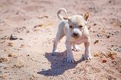 foto of animal cruelty  - Homeless puppy on the beach of Hurghada - JPG