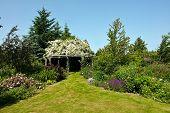 foto of pergola  - Wooden pergola gazebo in a beautiful blooming garden full of flowers and green plants - JPG