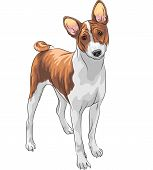 Vector Sketch Hunting Dog Basenji Breed