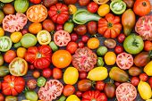 picture of plum tomato  - colorful tomatoes - JPG