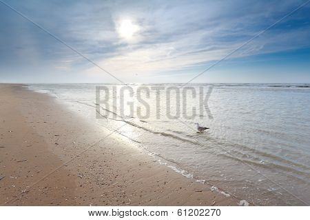 Seagull In North Sea Waves On Sand Sunny Beach