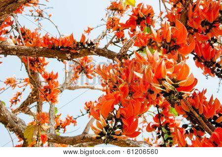Thongkown flower