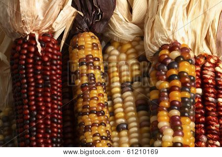 Husks of corn