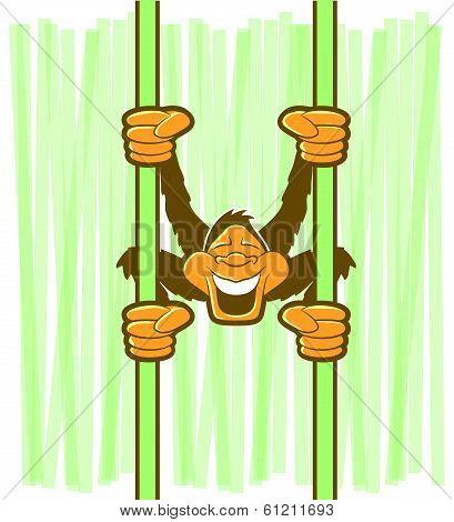 Monkey Hanging Cartoon