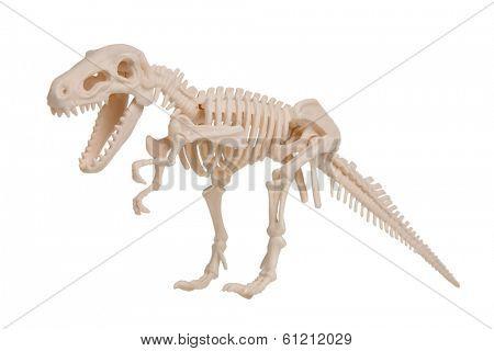 Dinosaur skeleton model, cut out on white background