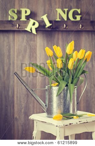 Spring tulips in watering can on rustic table