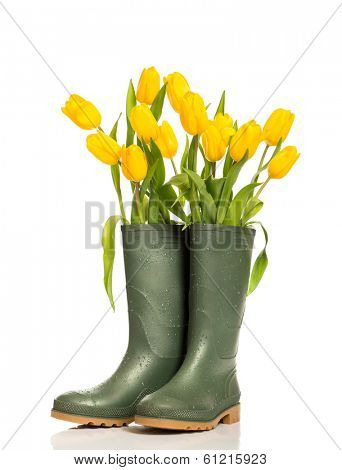 Spring tulip flowers in wellington boots on a white background