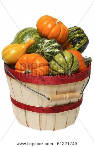 basket of squash and pumpkins on white