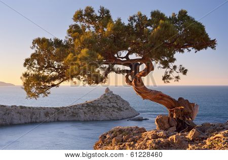 Spring landscape with a beautiful pine tree on a cliff. View from the mountains to the sea and cape. Crimea, Ukraine, Europe