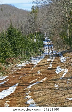 Tree Farm Road