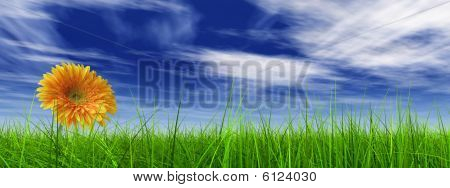 high resolution 3d green grass over a blue sky banner