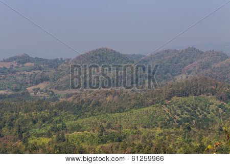 Garden With Mountain In Maetang Chiangmai North Thailand