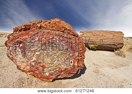 Petrified Tree, Petrified Forest National Park, Arizona, Usa.