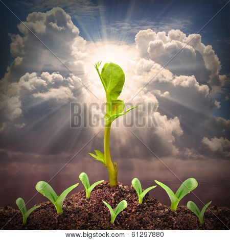 Seedlings growth. Competition and success metaphor.