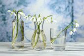 Beautiful snowdrops in vases on nature winter background