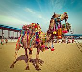 Vintage retro hipster style travel image of decorated camel at Pushkar Mela (Pushkar Camel Fair). Pu