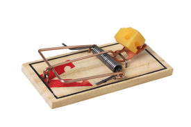picture of mouse trap  - mouse trap with cheese on white  - JPG