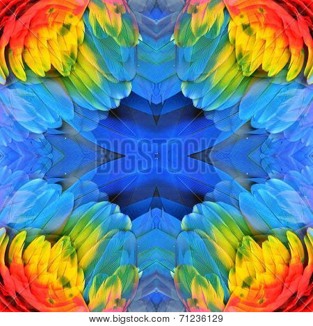 Macaw Feathers