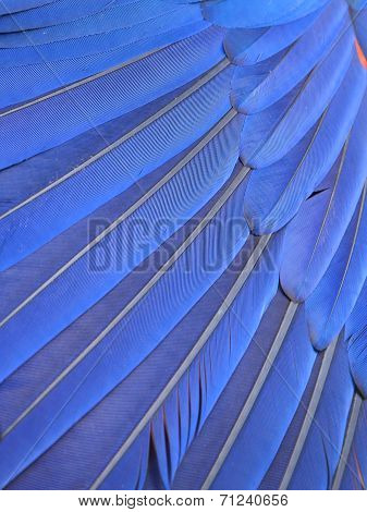 Blue Macaw Feathers