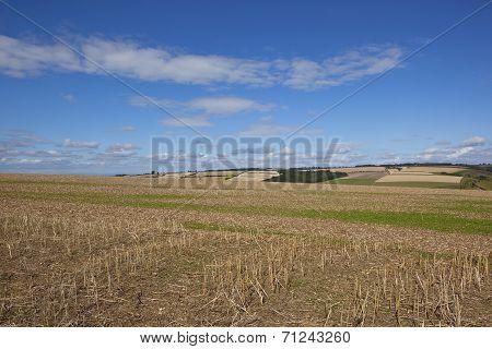 Blue Sky Over Patchwork Landscape