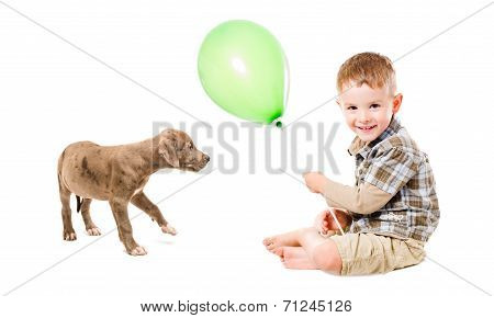 Boy and puppy pitbull playing balloon