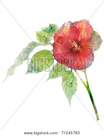 Watercolor Digital Painting Of Hibiscus Flower