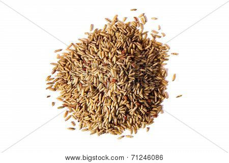 Germinated Brown Rice