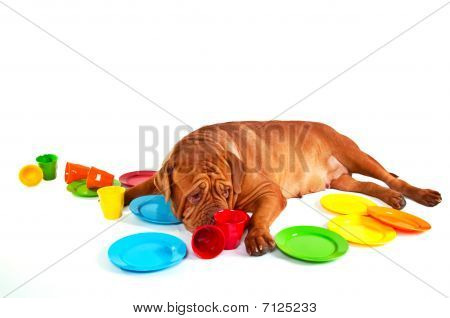 Dog With Dishes On White